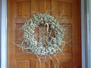 Palmetto Wreath 18'' inches diameter    $200.00